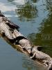 лагуна крокодилов