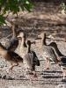 утки в национальном парке Какаду