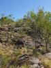 Barrk sandstone bushwalk (Kakadu NP, Australia)