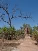 Litchfield NP. Termites Moulds