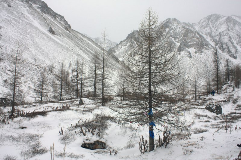 дерево духа дороги