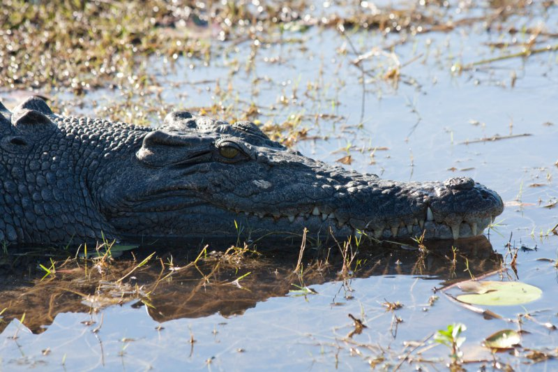 крокодил в национальном парке Какаду