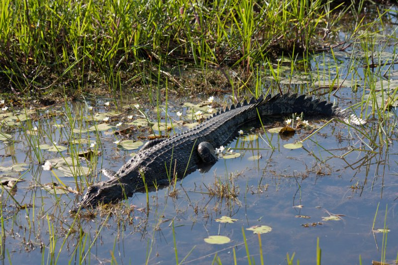 South Alligator River