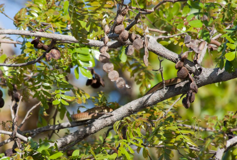 птицы в национальном парке Какаду