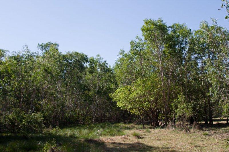 Anbangbang billabong (Kakadu NP, Australia)