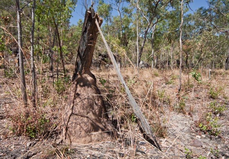 термиты, Barrk sandstone bushwalk (Kakadu NP, Australia)