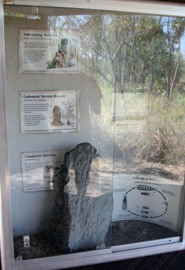 виды термитников