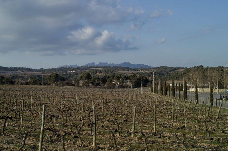 вид на виногданики и горный массив Montserrat