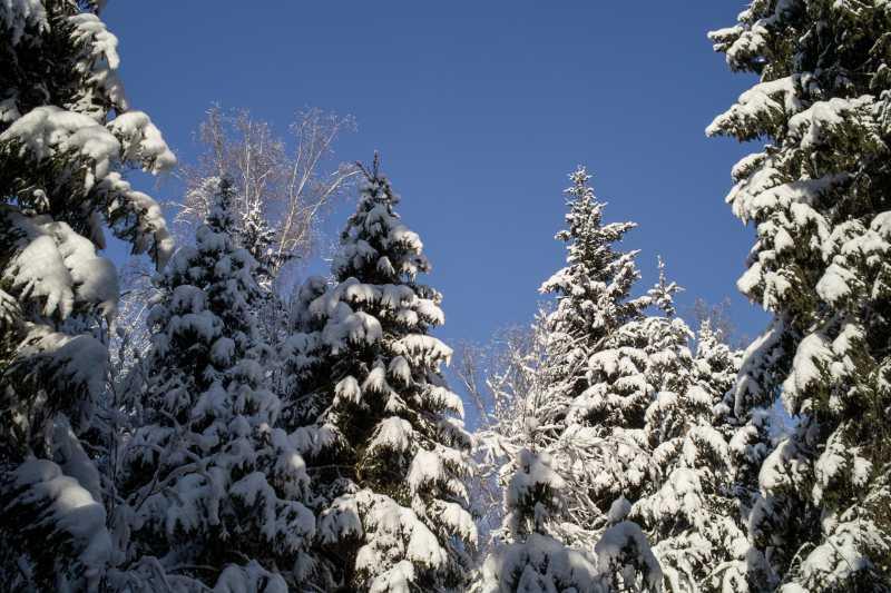Зимний лес в Подмосковье