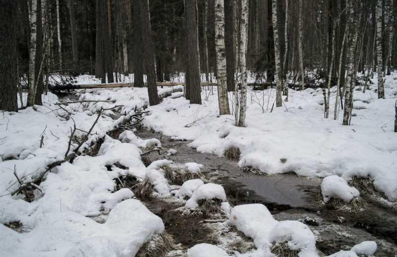 Мещерский край, январь 2014