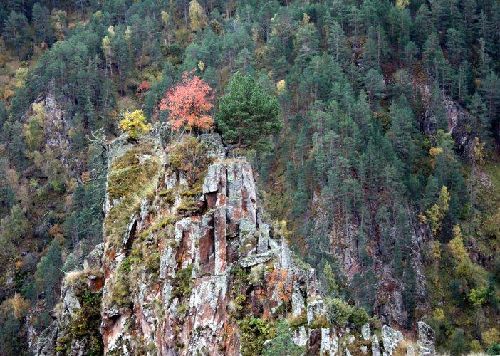 Осенний лес на Кавказе