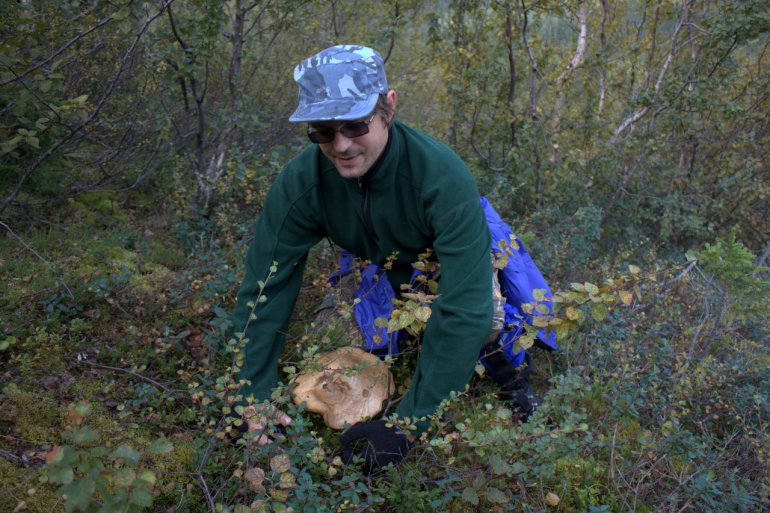 вот такие грибы на севере!