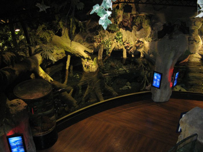 (аквариум в Dubai mall)