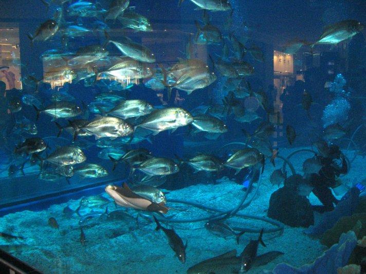 аквариум в Dubai mall