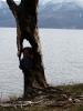 дерево на Байкале