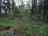 Северный лес