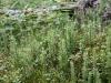 северная растительность