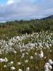 цветы в Ловозерских тундрах