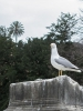 птичка в Италии