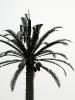 сотовое дерево в Эмиратах
